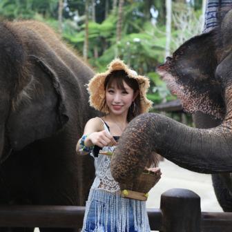 エレファント(象)