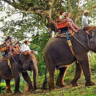 エレファントキャンプの象