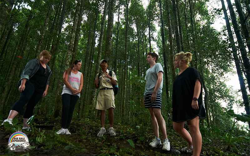 熱帯雨林をスタート
