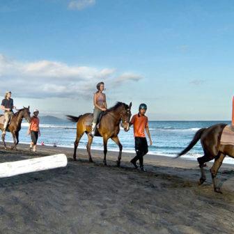 ビーチにたくさん馬が横切る