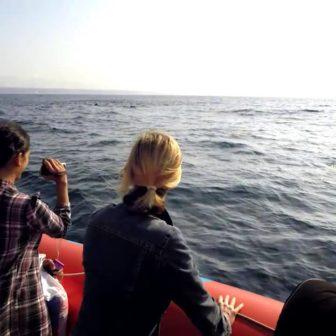 早朝に海でイルカを探す