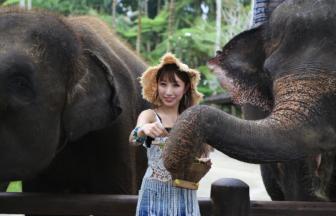 エレファント(象)サファリパークのバナー