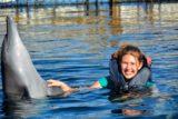 ドルフィン(イルカ)の写真