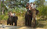 エレファント(象)乗り中