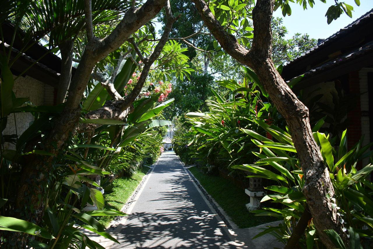 チャンディビーチホテルの敷地