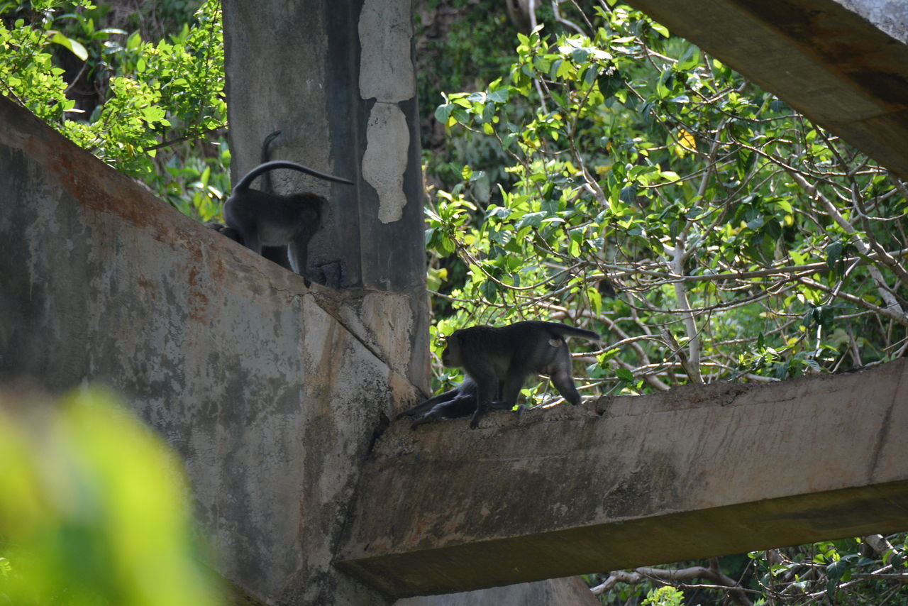 パダンパダンの猿