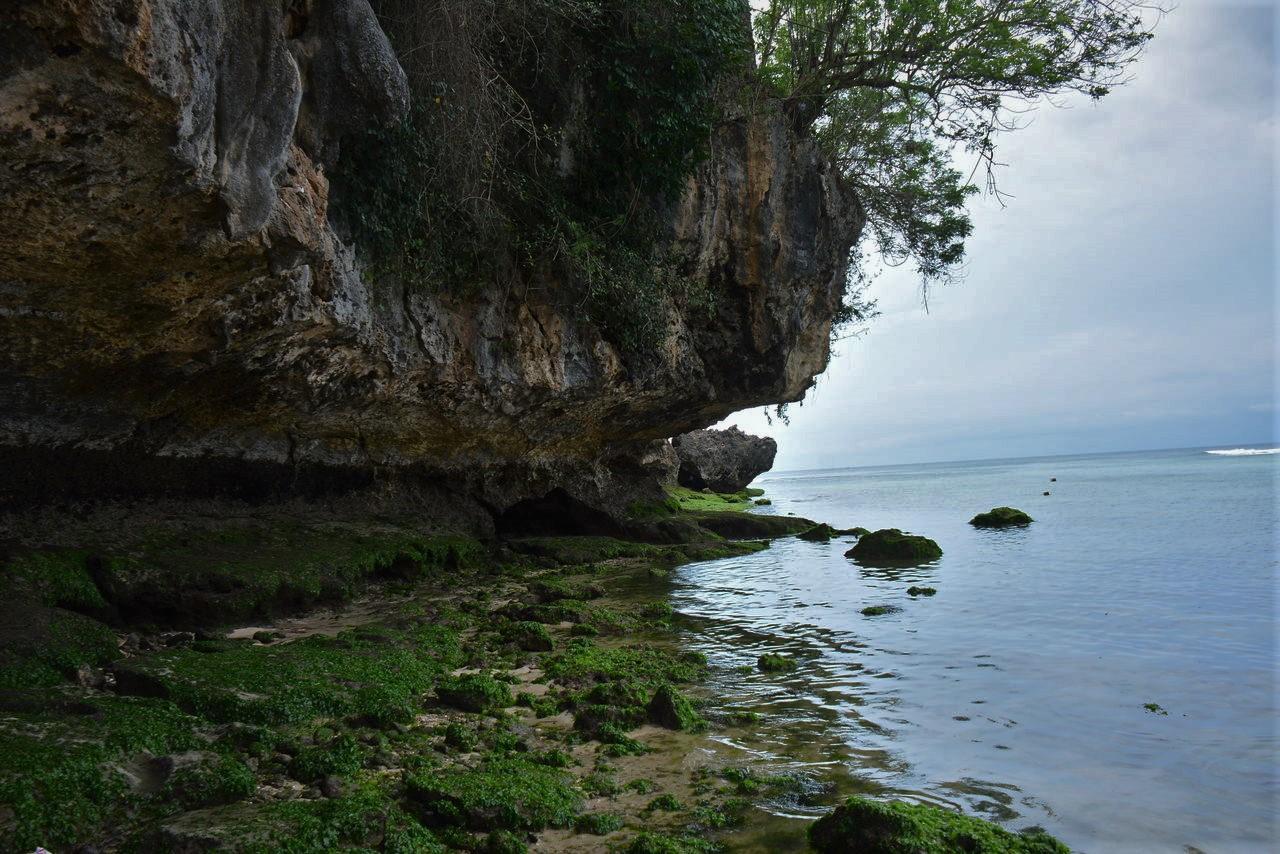 崖とコケ2