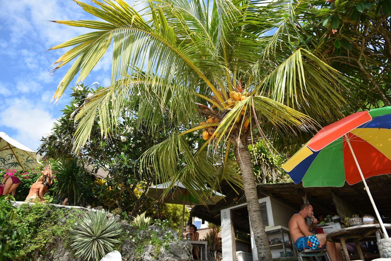 ヤシの木とパラソルのカフェ